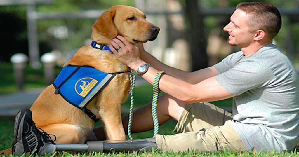 Pin by Richard Szachury on Pet Health | Service dogs ...