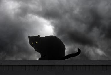 Image result for black cat creepy