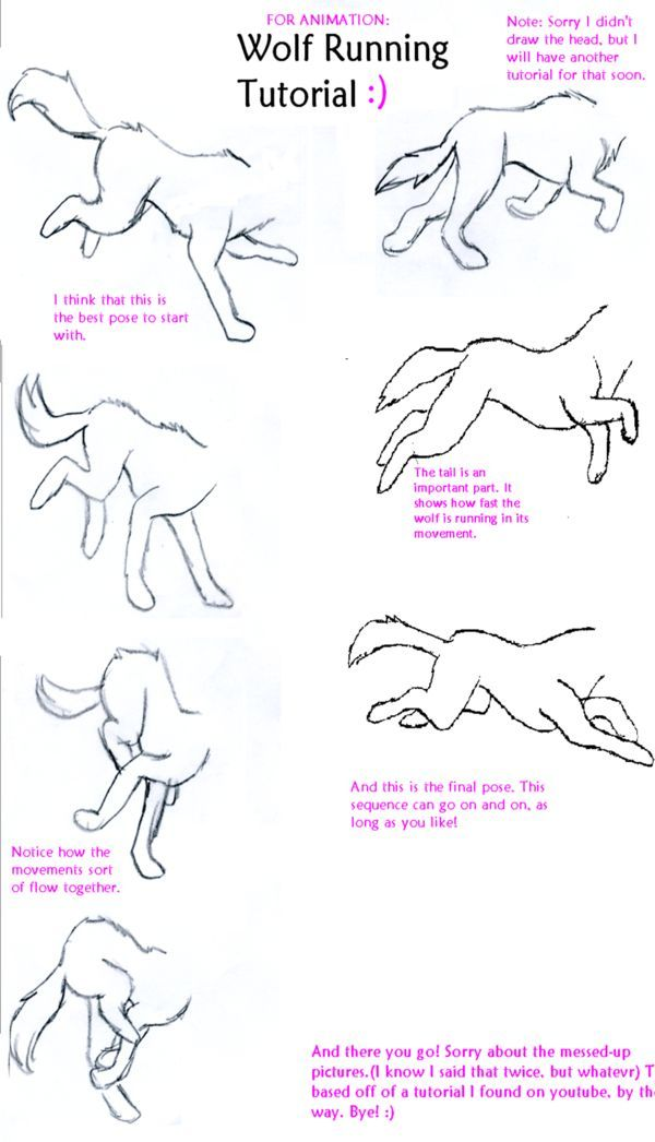 its how to animate a wolf running sorry about the last two images my scanner messed em up wolf run tutorial