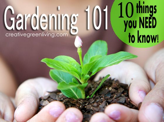 Beginning gardening tips: 10 things you need to know before you grow