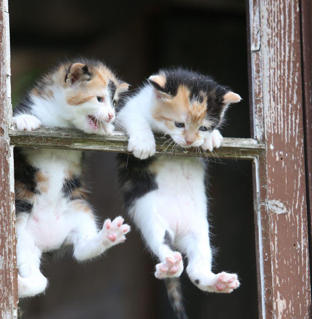 Pin On Cute Kittens
