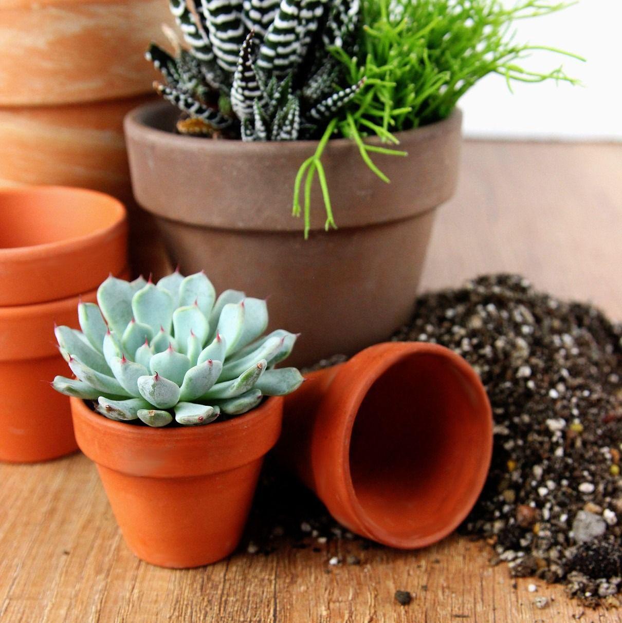 Kwiaty Egzotyczne Doniczkowe Rosliny Egzotyczne Do Domu Zielony Parapet S C Aloe Aloe Vera