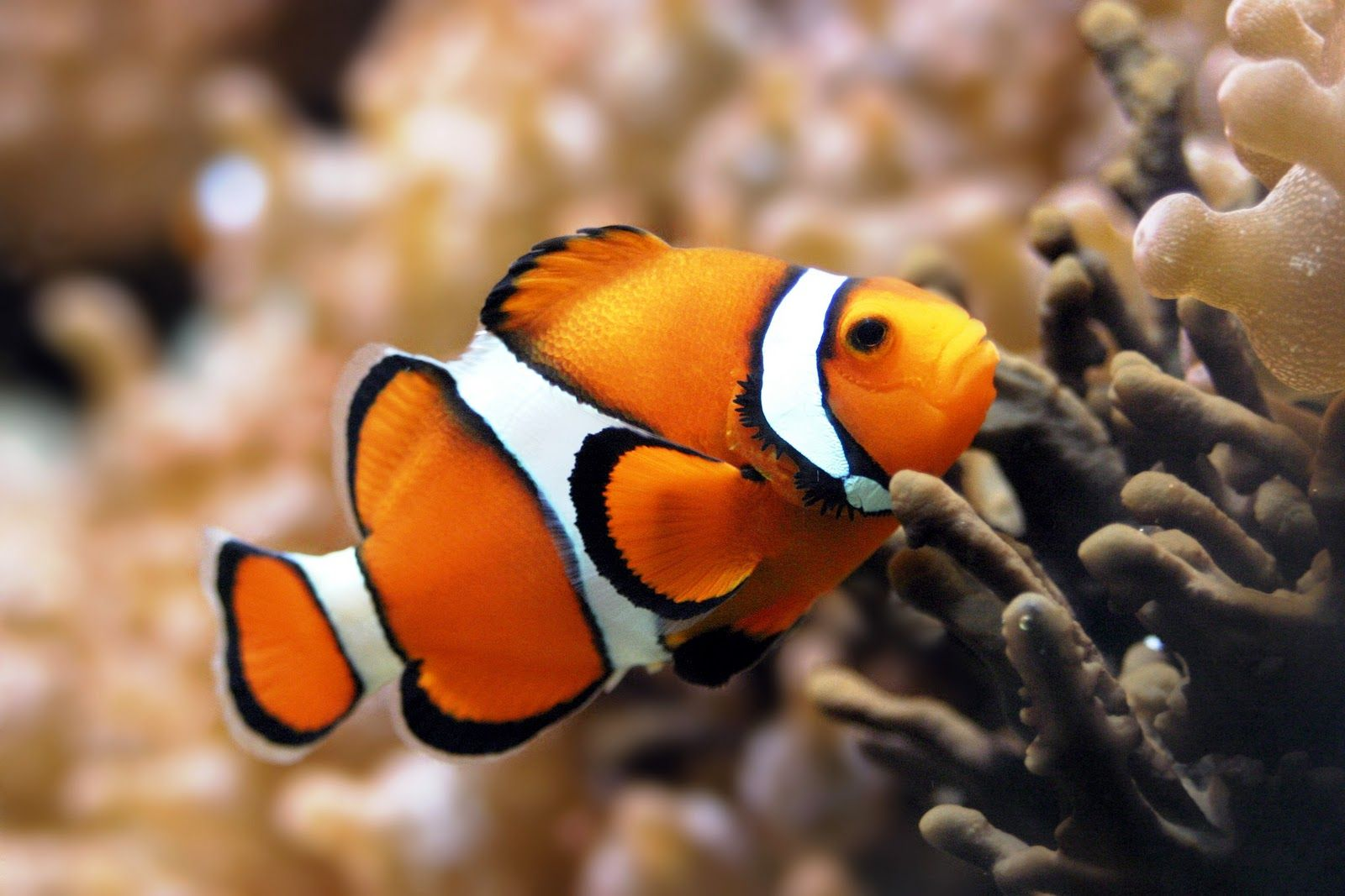 Bird Flower And Fish Clown Fish Marine Fish Clown Fish Animals