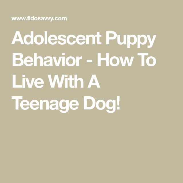 How To Live With A Teenage Dog