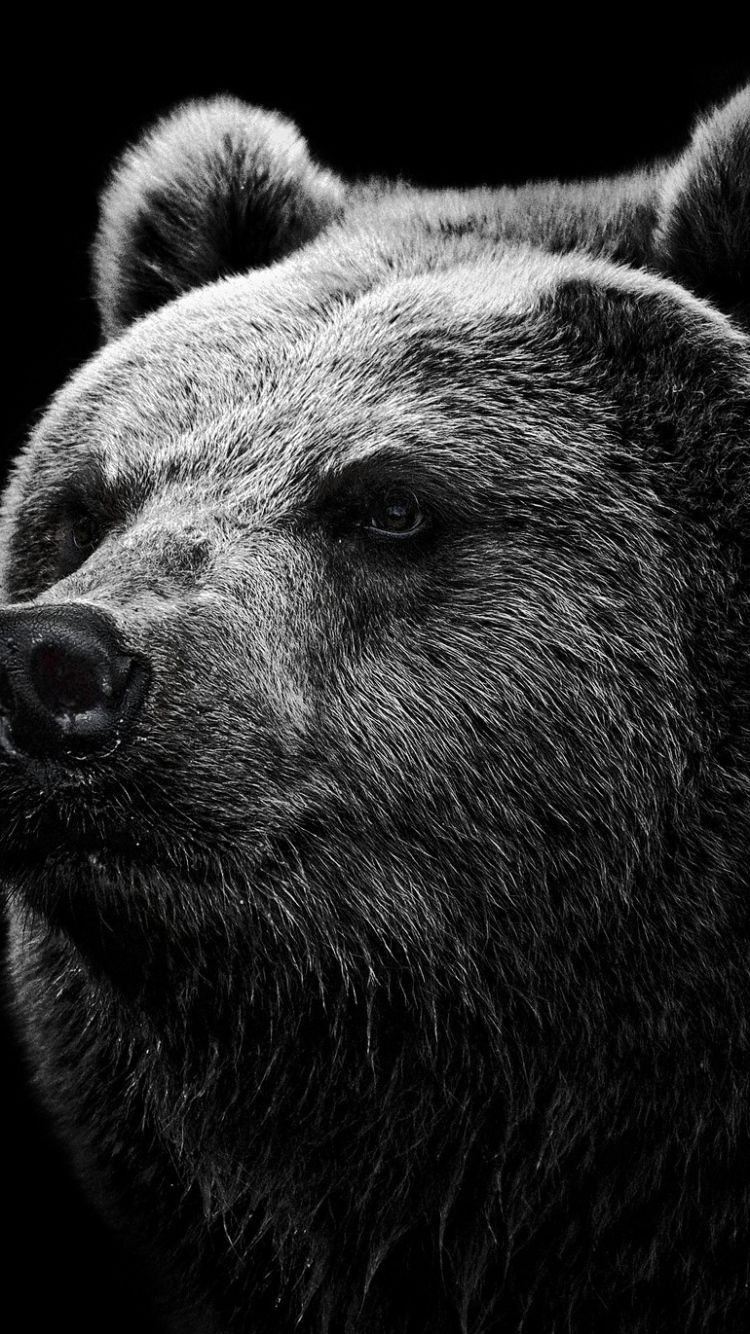 IPhone 6 Bear Wallpapers HD, Desktop Backgrounds 750x1334