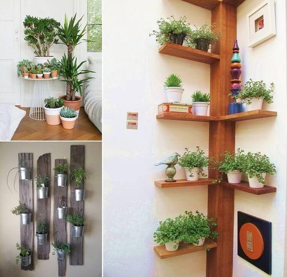 Decoracion de repisas con plantas jardineria pinterest plantas hogar y jard n interior - Hogar y jardin castellon ...