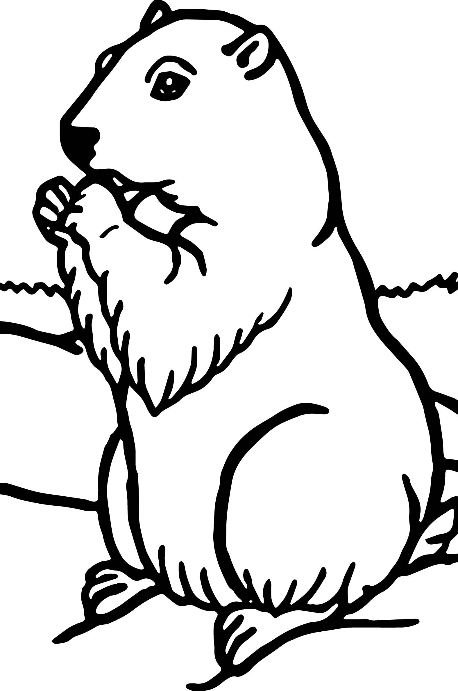 Groundhog Coloring Pages Animal Coloring Pages Coloring Pages