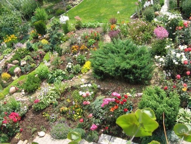 steingarten planung pflanzenauswahl zwerggehölze gartenideen - ideen gestaltung steingarten