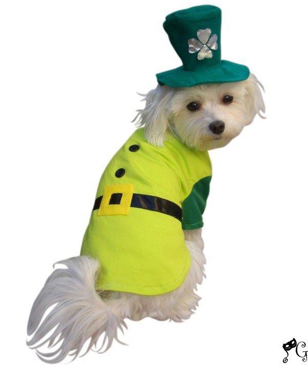 dog leprechaun boy dog costume