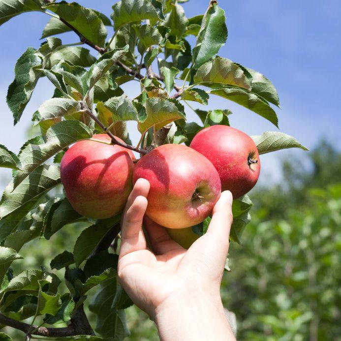Mori Es Nurseries Inc Fruit Trees Online Canada