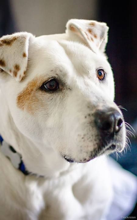 beautiful CHICO is loosing his foster. URGENT. He needs a new home. Please open your heart! https://www.facebook.com/photo.php?fbid=687383831279742&set=a.163691686982295.35381.163475570337240&type=1&permPage=1