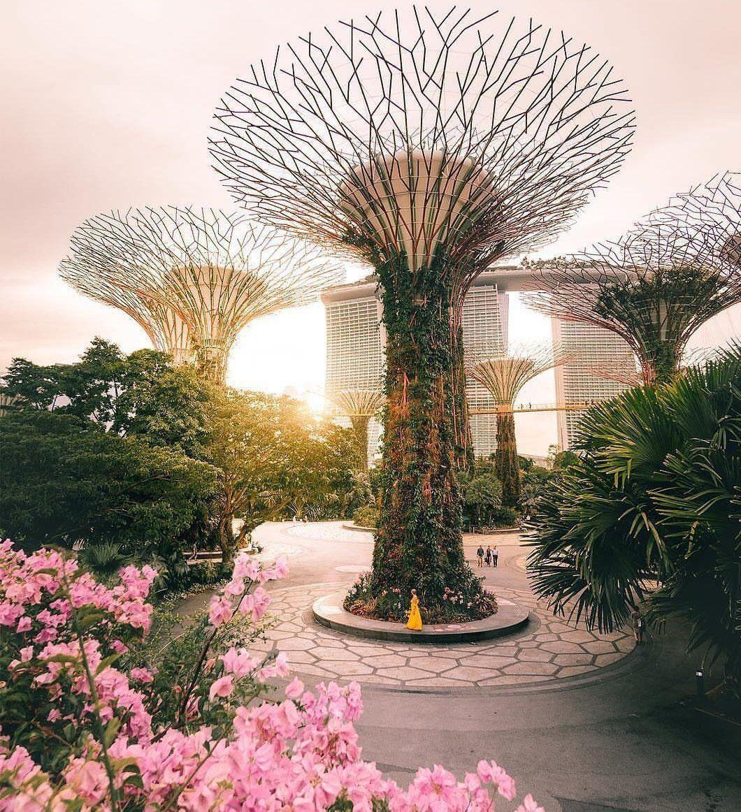 الوسم سنغافورة على تويتر With Images Singapore Travel Singapore Travel Tips Singapore Garden