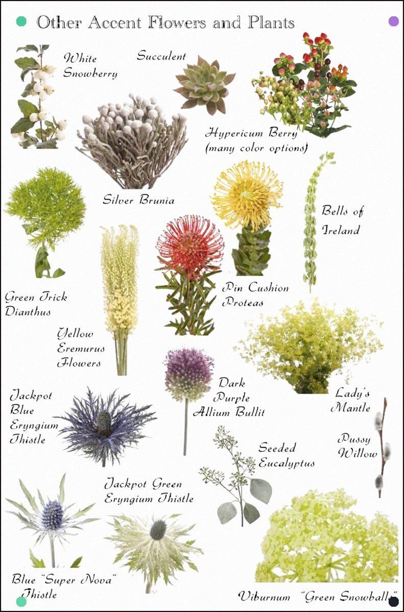 Pin By Eiko Suzuki On Front Garden Plan Flower Names Types Of