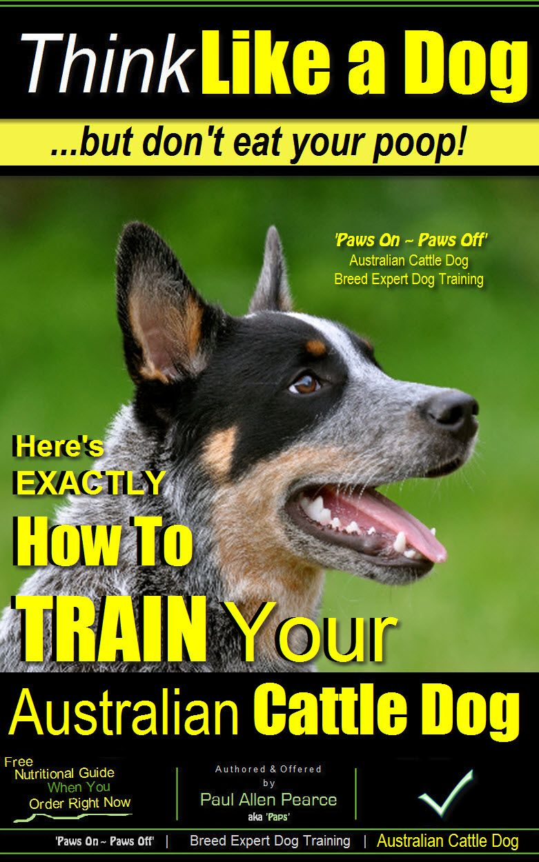 Australian Cattle Dog Training Read This Before Bringing Home Your