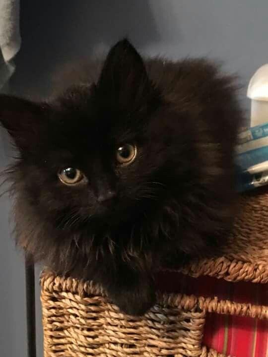 Katzen Tiere Schwarze Katze