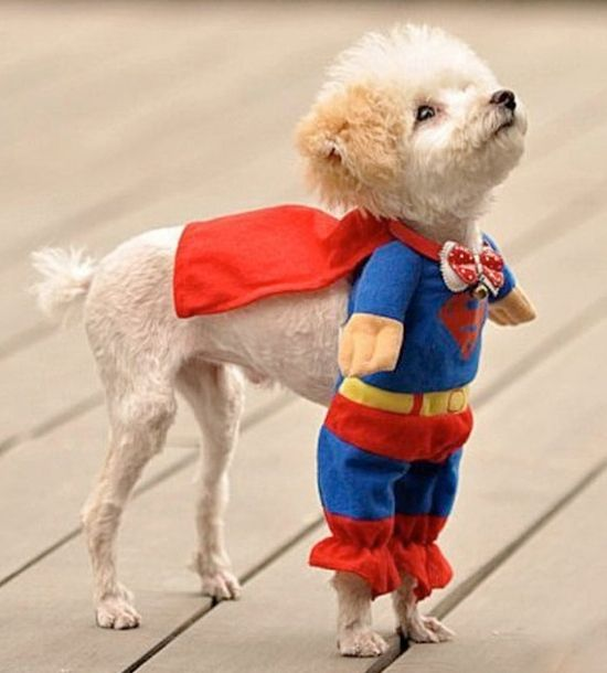 25 Adorable Pet Costumes - Kids Kubby & Superman Pet Costume | Pet costumes Costumes and Halloween costumes
