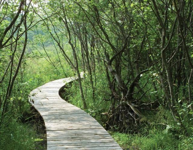 All e de jardin en bois esth tique et facile faire jardins jardins en bois jardins plan - Allee de jardin en bois ...