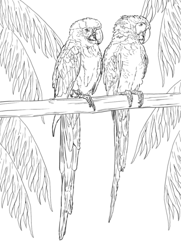 Two Scarlet Macaws on Perch Coloring page buddah Pinterest