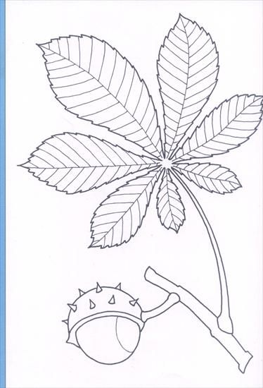 Jesien 1 Naplos Fall Coloring Pages Coloring Pages Autumn Crafts