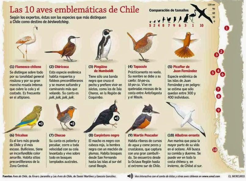 Los Nombres De Las Aves Que Viven En Chile Con Imagenes Aves