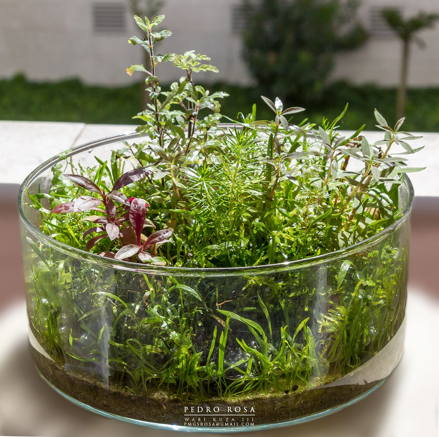 ikea bowl and light from the sun aquatic plant scapes pinterest jardin bocal terrarium. Black Bedroom Furniture Sets. Home Design Ideas