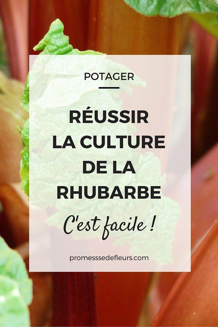 Culture Et Entretien De La Rhubarbe réussir la culture de la rhubarbe | jardinage potager