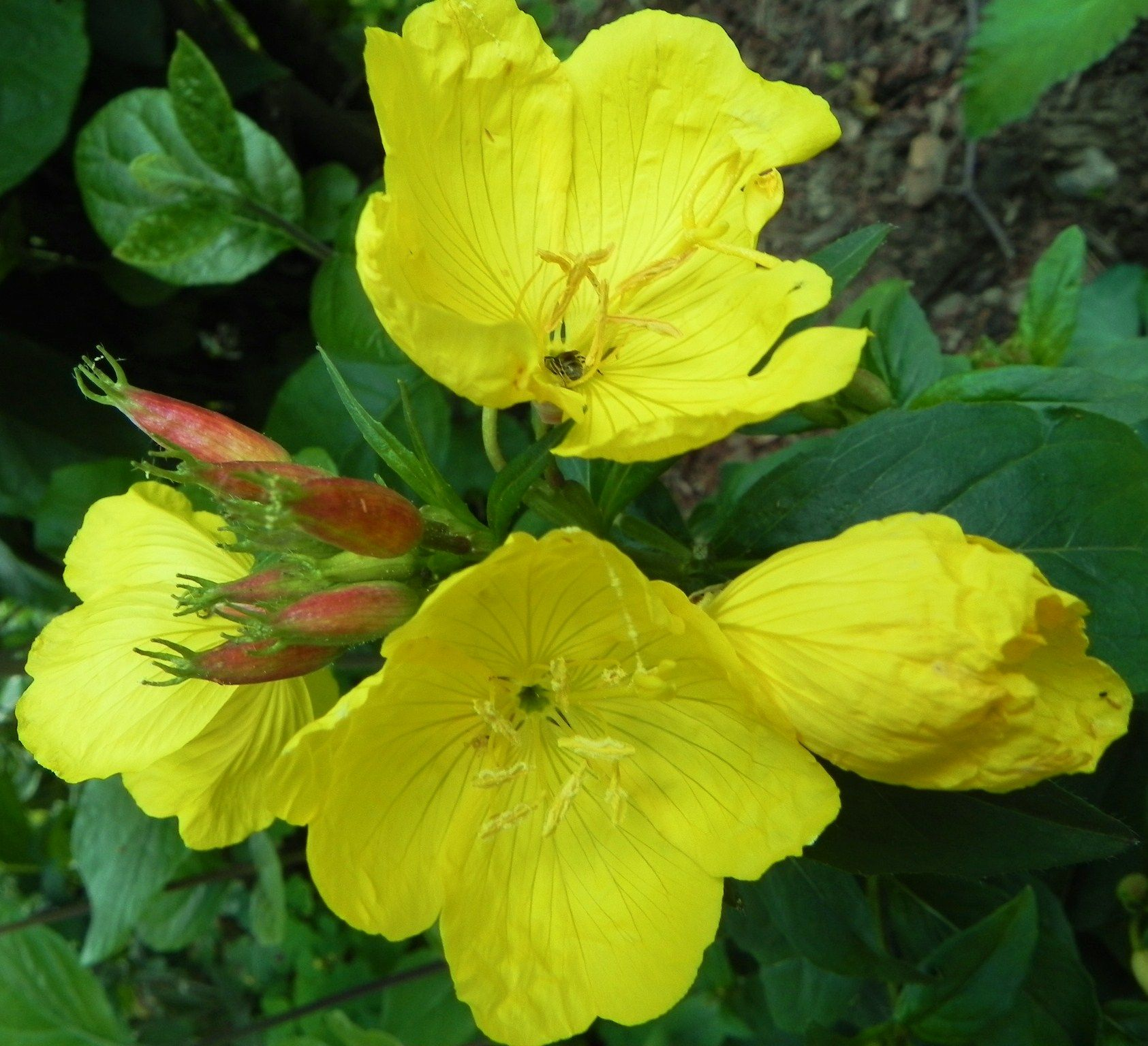 Top 28 Which Plants Come Back Every Year 48 Best