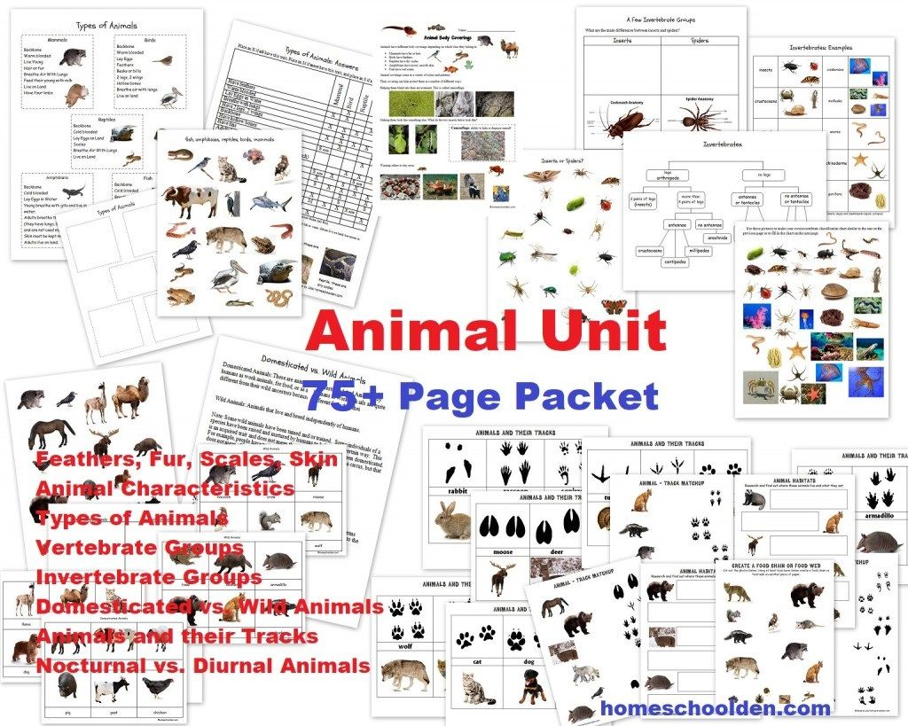 Animal Unit 75 Pages Worksheets Feathers Fur Scales Skin