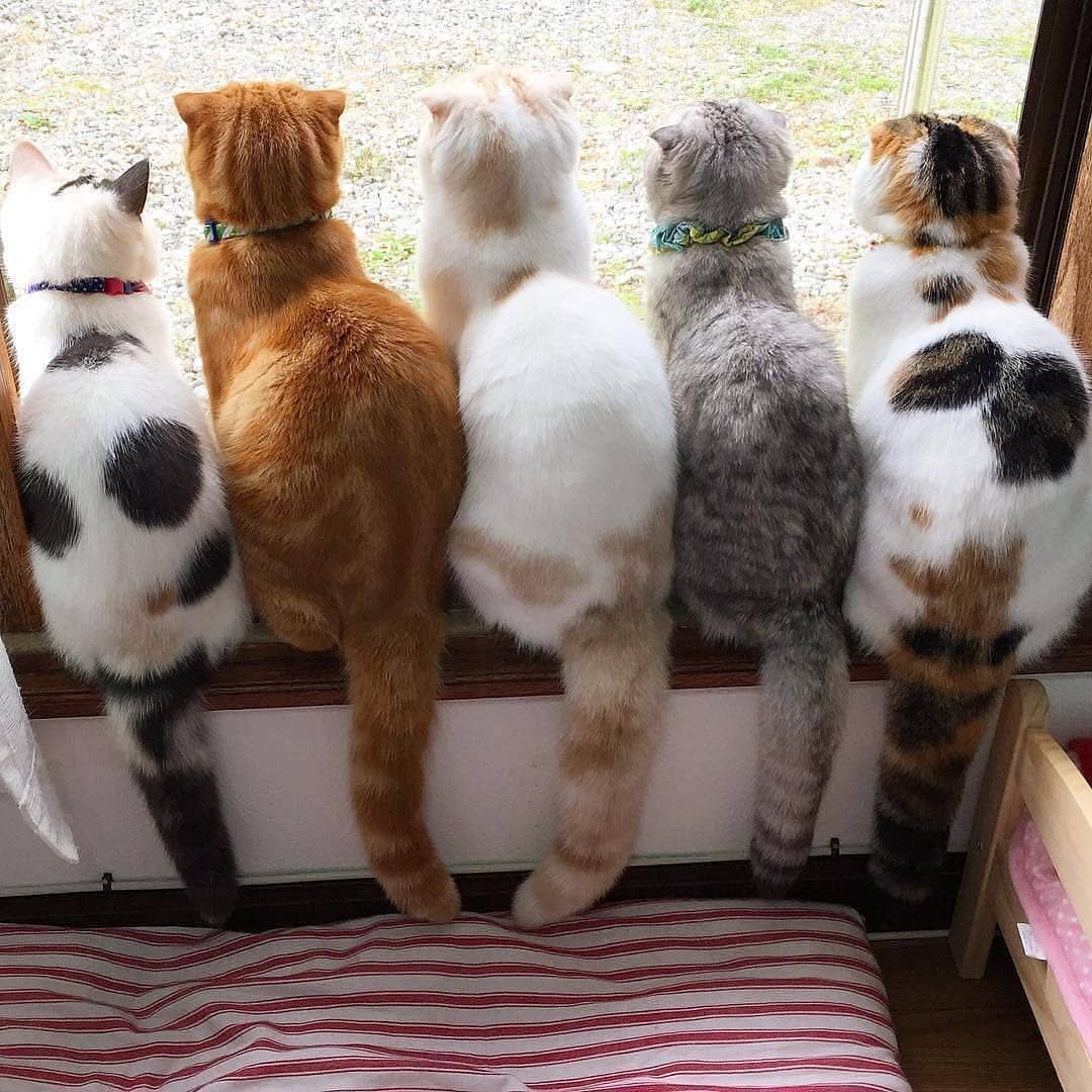 1 2 3 4 Or 5 Submit Your Cat S Photo To Our Contest Email To Be Featured Notification On Kittens Of Cute Cats Pretty Cats Cats And Kittens