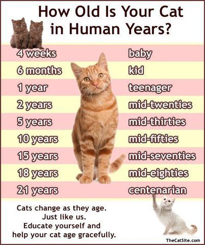 How Much Should A Cat Eat Http Pets Ok Com How Much Should A Cat Eat Cats 2889 Html