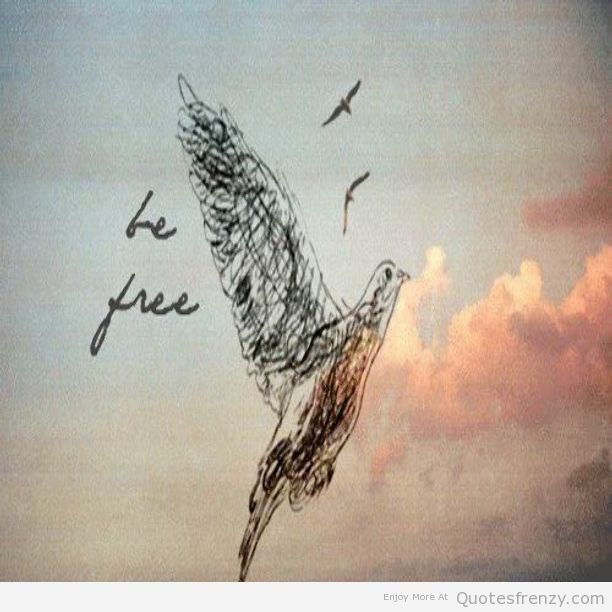 Bird freedom art sketch Quotes FREEDOM Pinterest