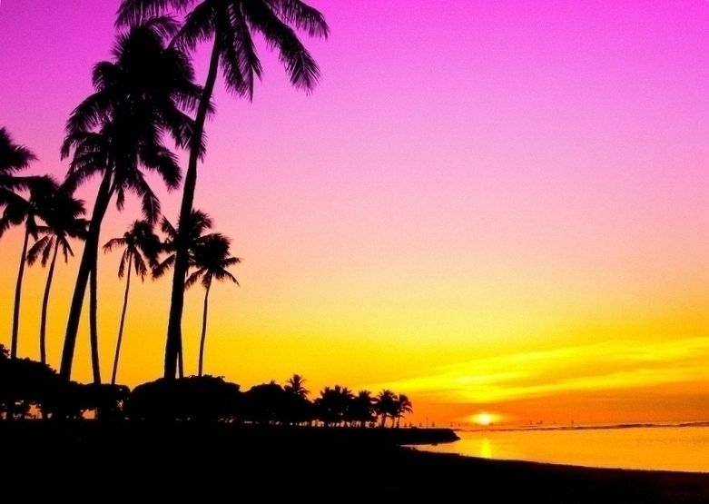 Sunset and Palm Trees Edit by Mellowax on deviantART