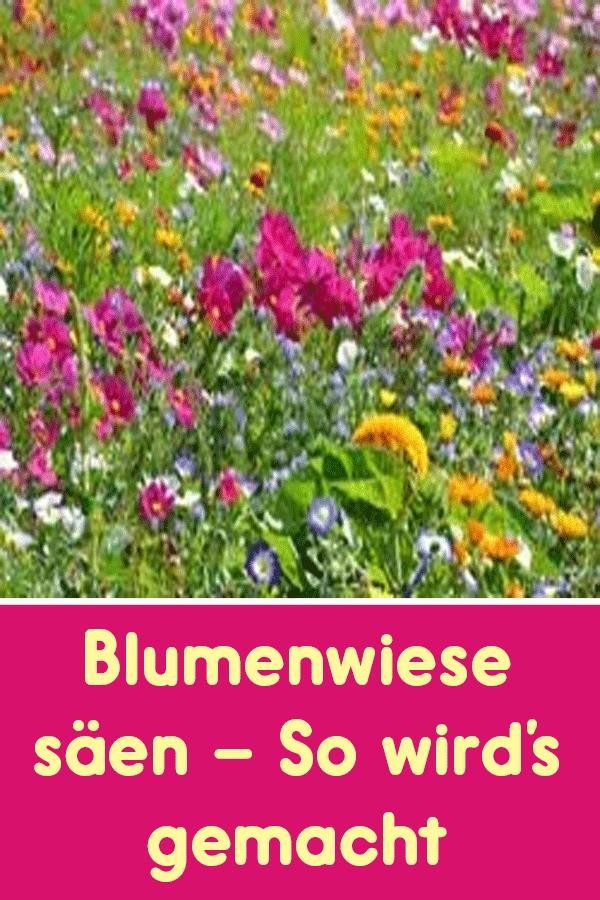 Blumenwiese Säen So Wirds Gemacht Gartengestaltung Garden