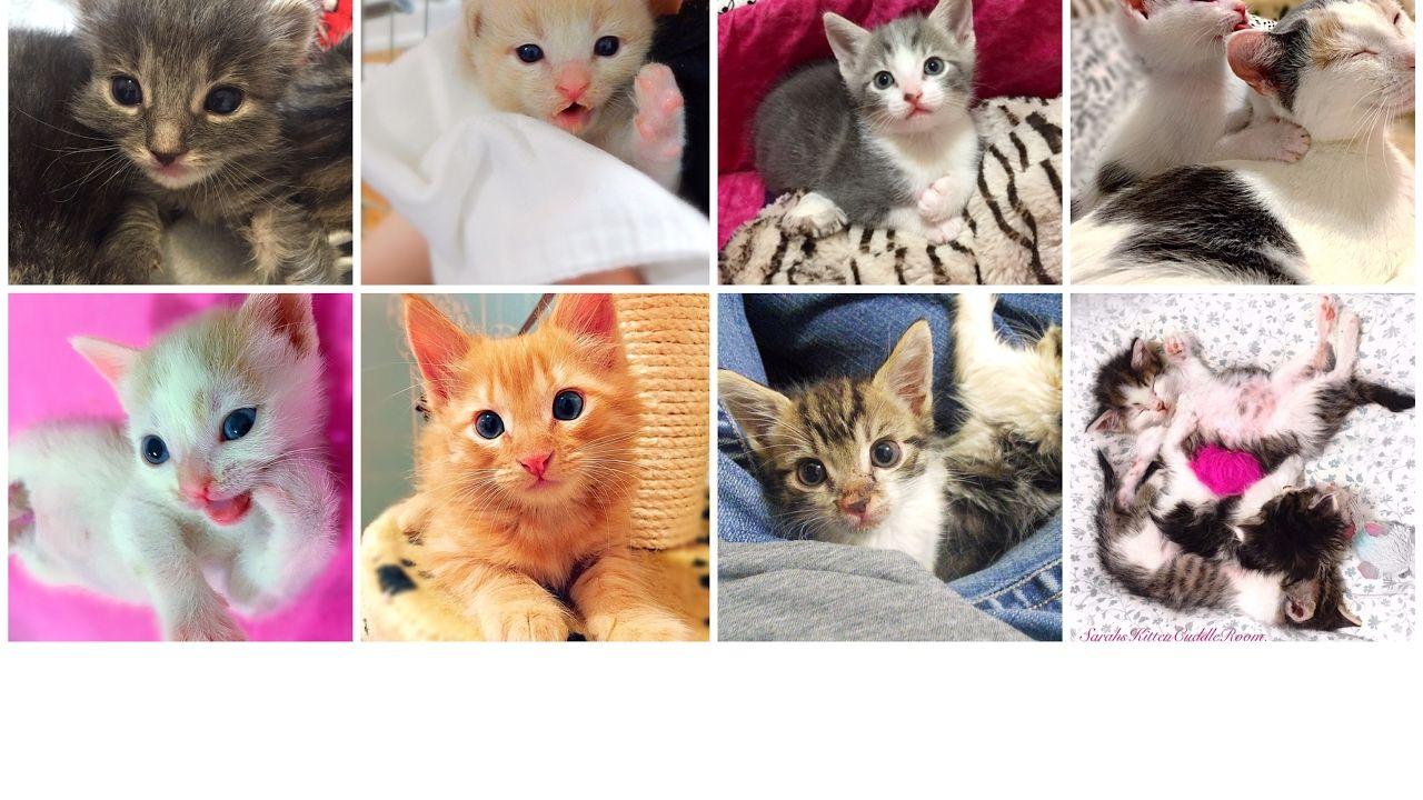 Rescued Kitty Harlequin Her 6 Kittens Live 24 7 Alternate Cam At Ht Kitten Cuddle Cute Kitten Gif Foster Kittens