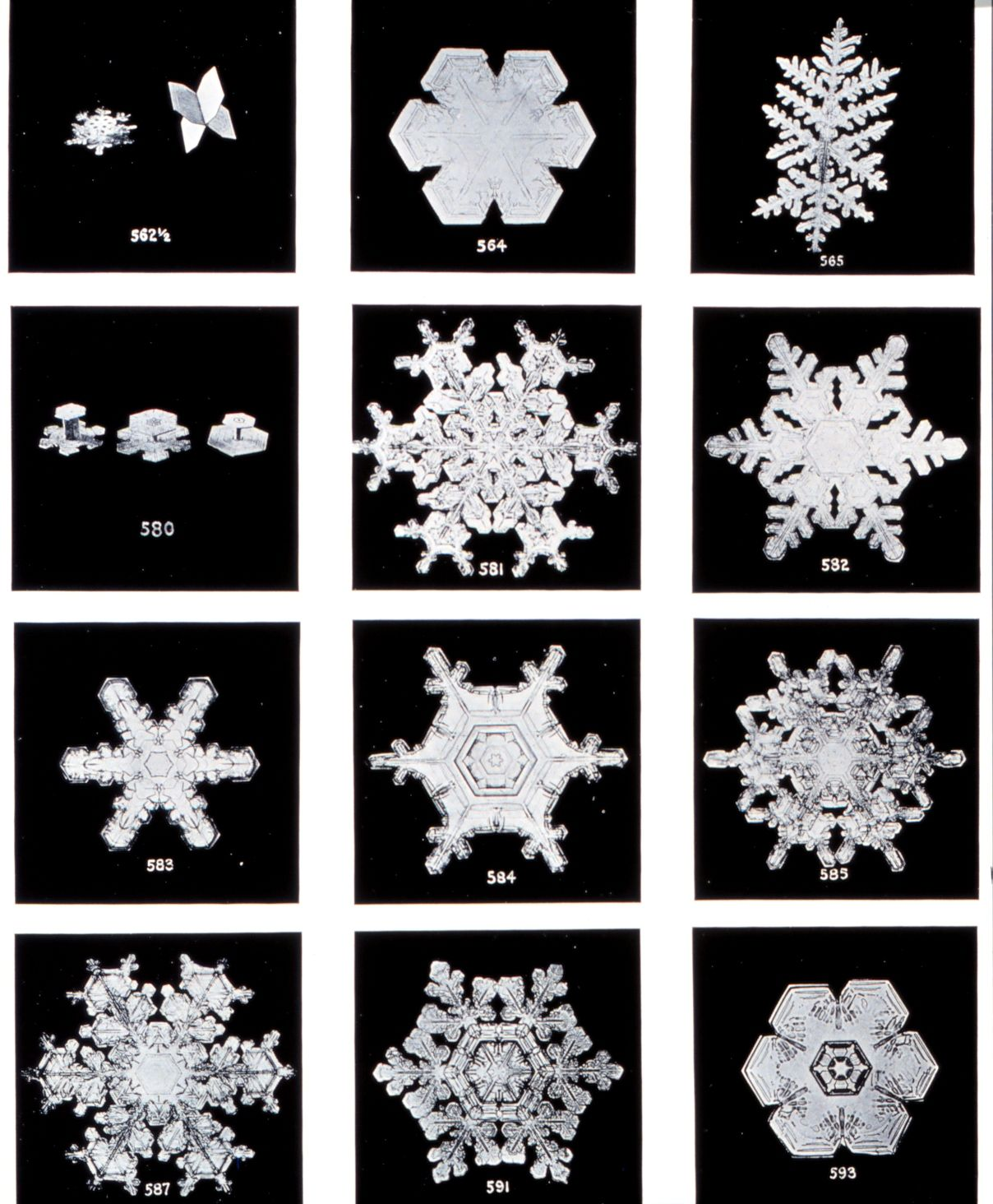 The First Snowflake Photographs Art And Illustration Snowflakes