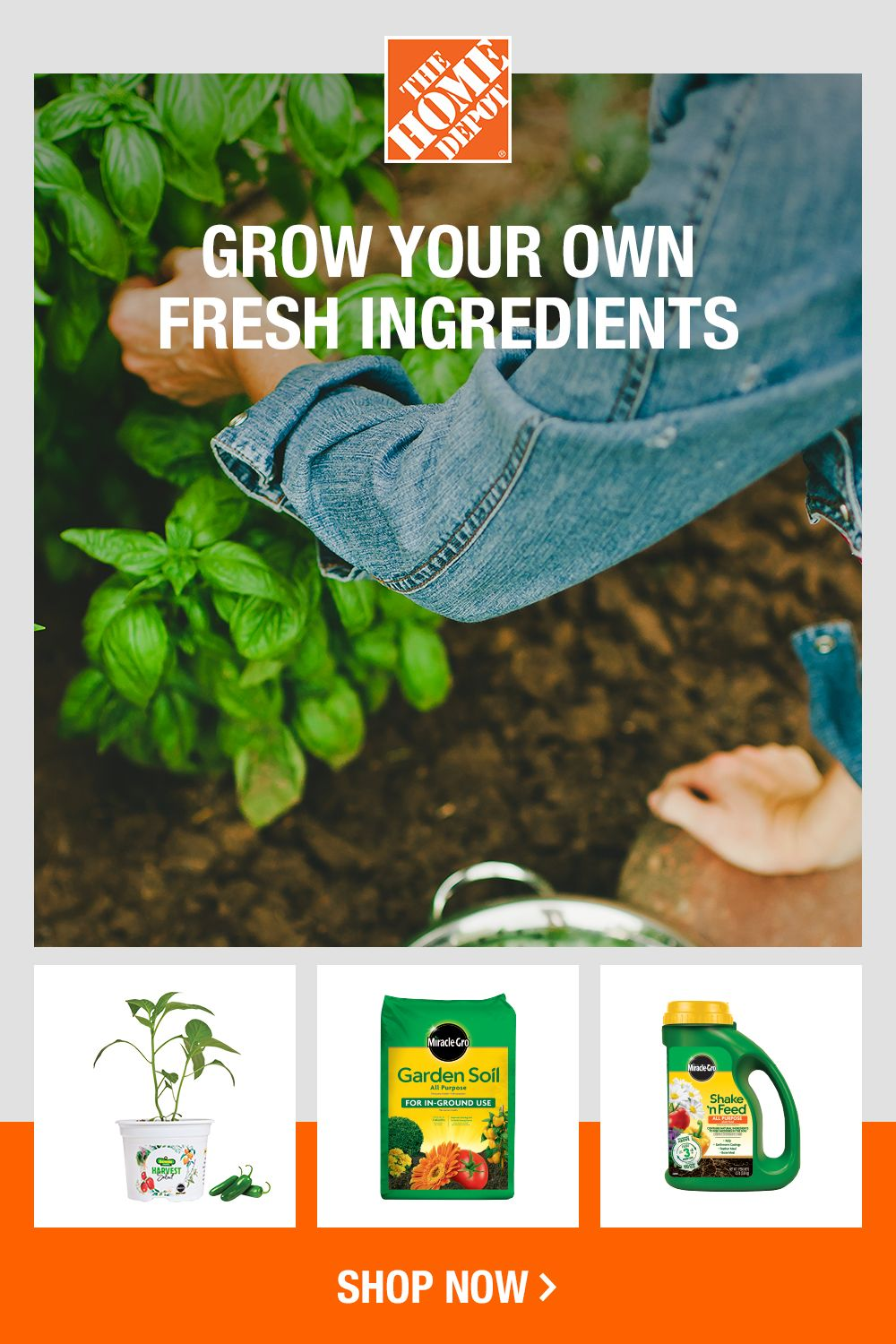 Grow fresh ingredients with veggie and herb gardening