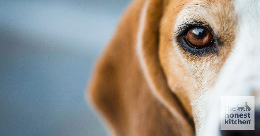 Canine eye irritation what to do the honest kitchen