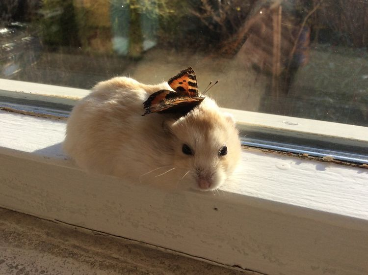 Photo of Hamster and butterfly