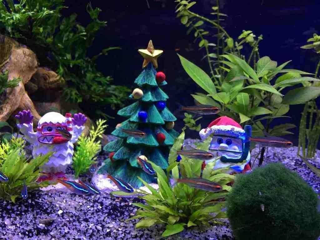 Aquarium christmas decorations tv aquarium decor for Aquarium decoration ideas pictures