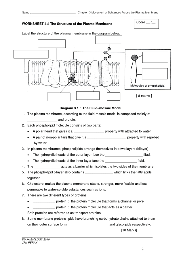 The Structure Of The Plasma Membrane Biology Classroom Biology Worksheet High School Biology