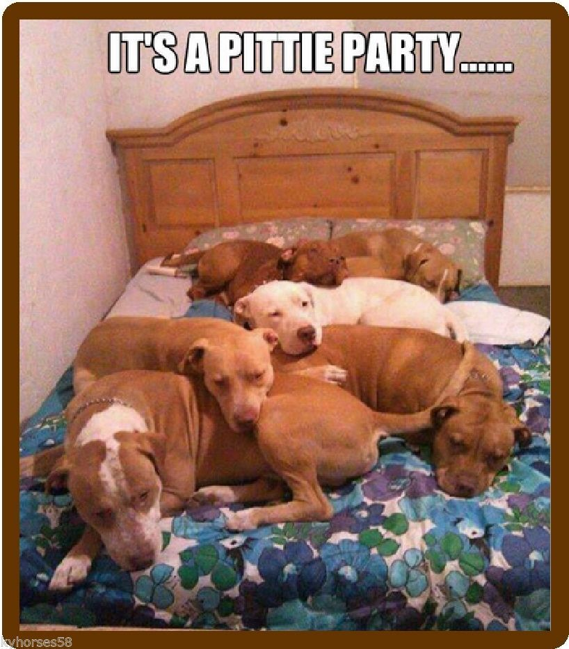 Details About Funny Pitbulls It S A Pittie Party Refrigerator