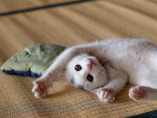 Half kitten, half baby possum | Uncontrollable Cuteness | Baby cats