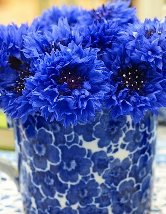 At Home: Royal Blue Beautiful | ZsaZsa Bellagio - Like No Other