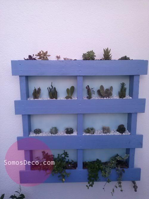 Hacer un macetero/invernadero con un palet | Cacti, Pallets and Plants