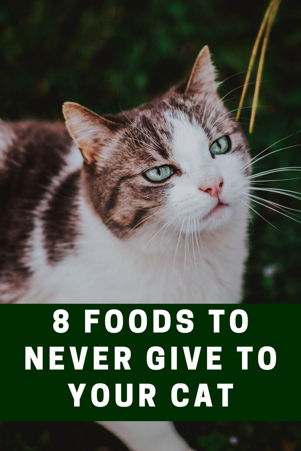 8 Foods to Never Give to Your Cat Welfar4us in 2020