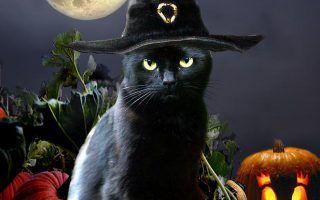 1366x768 funmozar halloween cat wallpapers. 3d Cute Halloween Cat Wallpaper 2020 Live Wallpaper Hd Halloween Cat Cat Wallpaper Black Cat Halloween