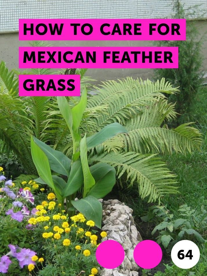 Learn How to Care for Mexican Feather Grass | How to guides, tips and tricks