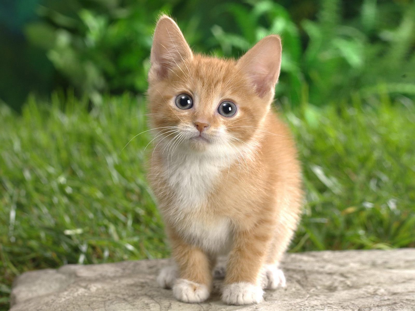 Innocent And Cute Cat Wallpaper Hd Animals And Birds Wallpapers Kittens Cutest Cute Cat Wallpaper Pets Cats