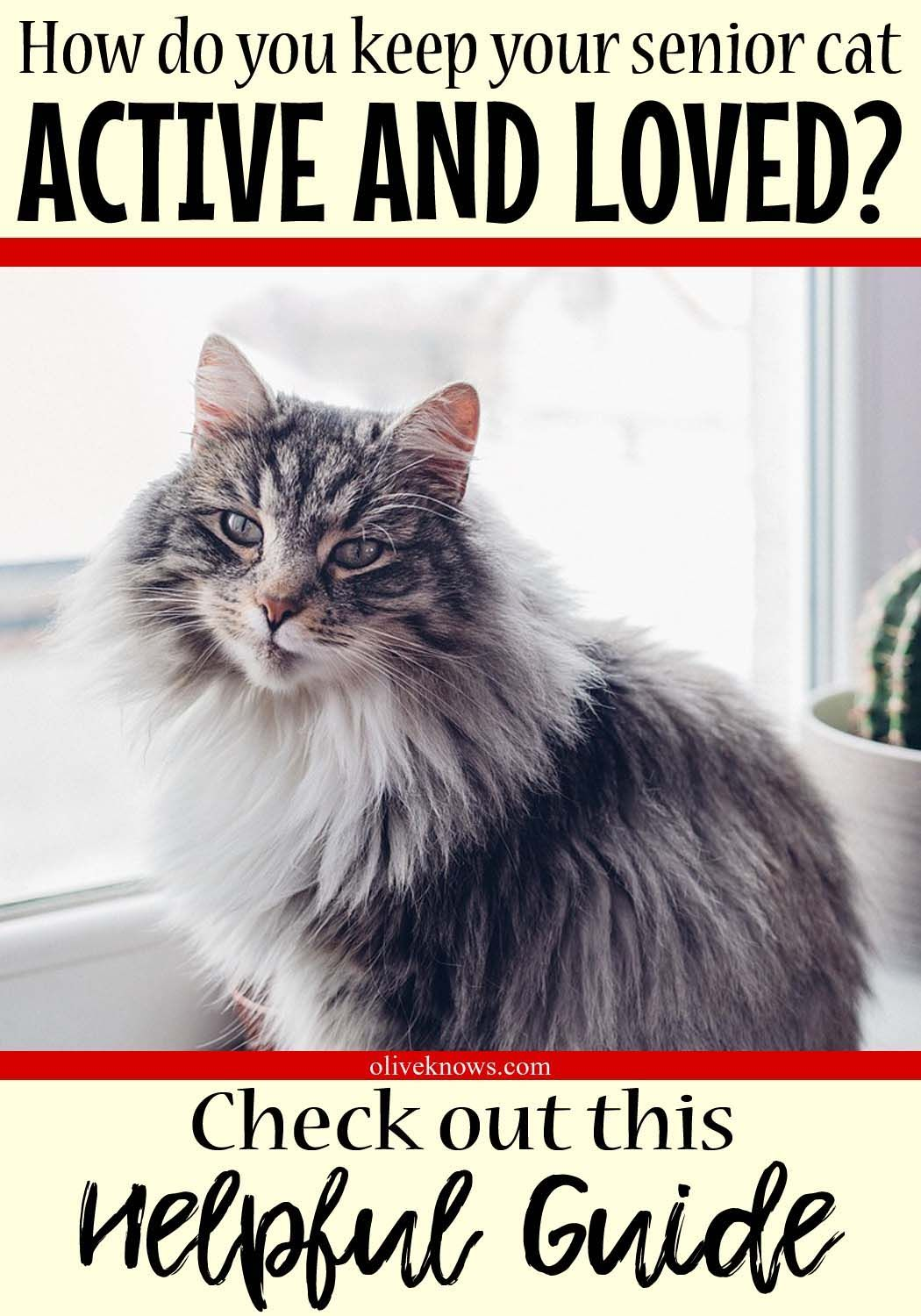 How To Keep Your Senior Cat Active And Loved Oliveknows Senior Cat Cat Training Sick Cat