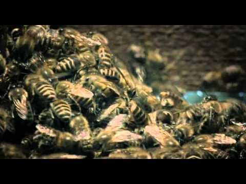 Japanese giant hornet scout killed by asian bees youtube oh yeah thats not terrifying bees surround enemy wasps in giant bee ball cook with high temperatures sciox Choice Image